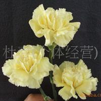 鲜花切花花卉鲜花批发鲜切花批发单头康乃馨黄色(图)