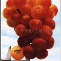 供应早熟葡萄果树苗