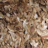 出售正宗美国进口美国红枫种子,出售美国红枫树苗
