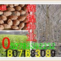 出售:牡丹种子(保质保量货到付款)