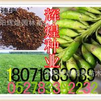 出售:紫穗槐种子(保质保量货到付款)