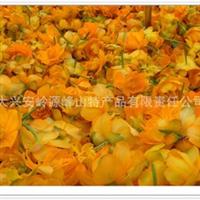 供应金莲花