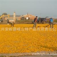 供应黑龙江省大兴安岭金莲花野生