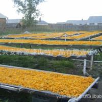 内蒙古、大兴安岭金莲花