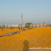 产地金莲花