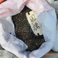 供应花卉种子《国槐种子》《槐树种子》价格基地直销