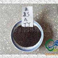 供应草花类种子《五彩石竹种子》石菊、绣竹、剪绒花