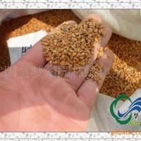 供应花卉种子林木种子《牡丹种子价格》当年牡丹种子