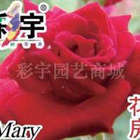 供应花房月季花苗,果树,果苗,花卉苗