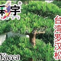 供应台湾罗汉松苗,果树,果苗,花卉,花卉苗