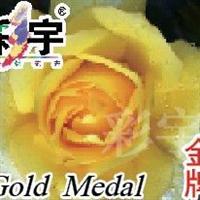 供应金牌大花观赏月季花苗,果树,果苗,花卉苗