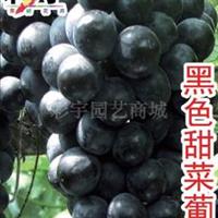 供应黑色甜菜葡萄苗,果树,果苗,花卉,花卉苗