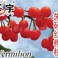 供应朱砂红樱桃苗,果树,果苗,花卉,花卉苗