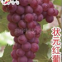 供应摩尔多瓦葡萄树葡萄苗,果树,果苗,花卉,花卉苗