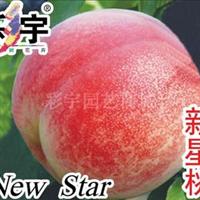 供应新星桃苗,果树,果苗,花卉,花卉苗
