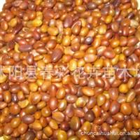 供应大皂荚种子皂角种子价格南方小皂角种子供应商林木种子
