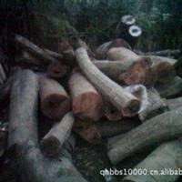 供应优质香楠木香樟¶原木金丝楠木香樟木松木原木