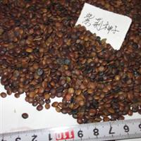 紫荆种子(观赏花卉、发芽率高、质量优)