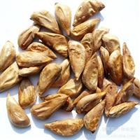 雪松种子(发芽率高、产地云南)