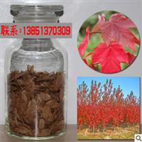 新采摘美国红枫树种子日本红枫苗欧洲红枫红枫种子红枫树苗