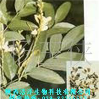 供应槐米提取物/芦丁NF11