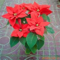 人造圣诞花仿真圣诞花装饰圣诞花