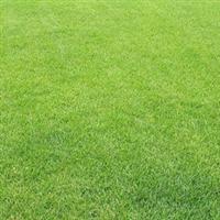句容源玉苗圃供应批发矮生百慕大草坪草皮等详情可电联或来参观