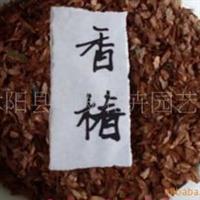 花卉种子苗木香椿种子一斤起批