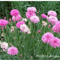批发金盏花、别名:黄金盏、长生菊、醒酒花、常春花、金盏等。