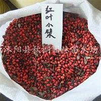 出售红叶小檗种子干种子当年新采种子支持货到付款