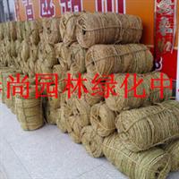 草绳园林专业草绳捆树绳