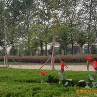 承包绿化工程、园林工程施工、园林绿化工程施工