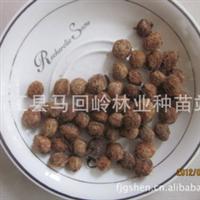 批发供应杨梅种子种苗种球江西种子九江种业种子种苗