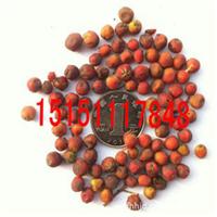 出售新采高牙率,高品质花木种子-石楠种子(图)