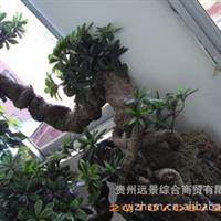 贵州远景园林设计、绿化【高仿真】艺术造型【供应与定做】