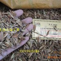 现货出售优质丁香花种子、丁香种子【保证新种】发芽率75%以上