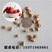 批发供应优质种子山楂种子山楂苗进口植物种子优质果树种子