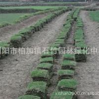 大量供应马尼拉草皮,带土层厚实,易成活,易栽种