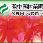 绿化工程用色块苗木铁树、雪松、香泡、北海道黄杨、萧山茶花