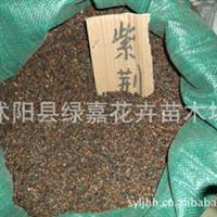 公司直销新采收紫荆种子满条红紫荆花种子保质保量