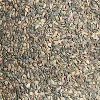 批发各种优质花木种子-蒲公英种子
