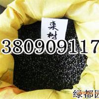 供应优质新采黄山栾树种子(图)