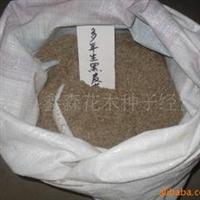 厂家直销沭阳鑫森优质桃树种子100%发芽率