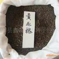 厂家直销沭阳鑫森优质白三叶种子100%发芽率