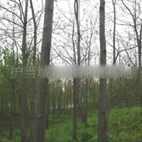 2011年春低价出售4.5公分泡桐树苗