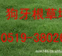 草坪种子:白三叶草坪种子 狗牙根草坪种子 高羊茅草坪种子