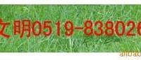 混播草坪百慕大草坪黑麦草、混播草坪(百慕大草坪+黑麦草)