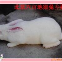 兔子养殖设备供应种兔