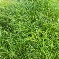 厂家直销绿化、休闲场地、运动场、景观专用人造草坪