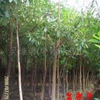 绿化树苗盆架子